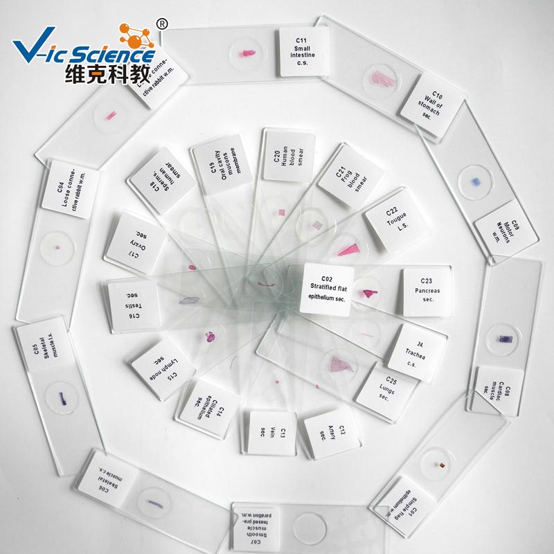 100 قطع الأنسجة أعد شرائح المجهر عدة إعداد الشرائح في مربع من البلاستيك